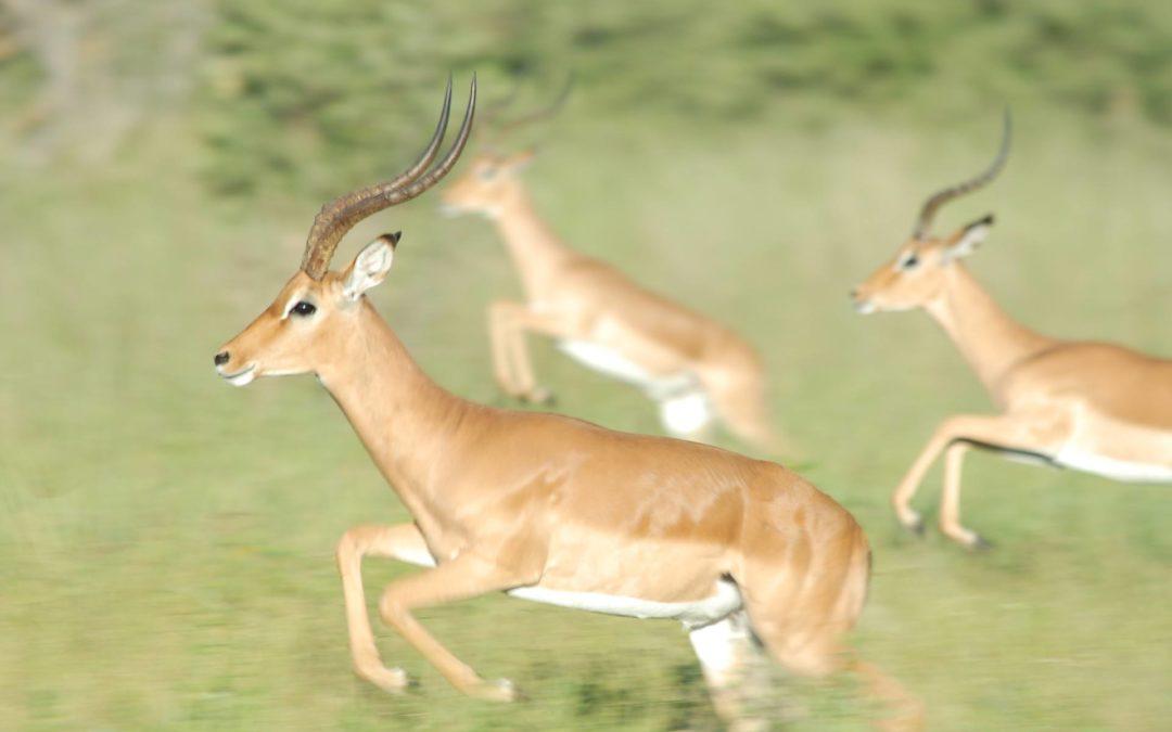 Új pályázat indul gyors növekedésű (gazella) vállalkozásoknak